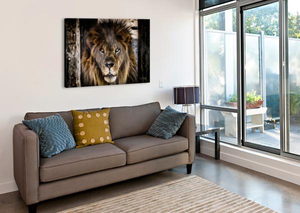 A REGAL LION JULIAN STARKS PHOTOGRAPHY  Canvas Print
