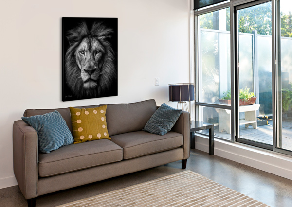 A LION IN BLACK & WHITE JULIAN STARKS PHOTOGRAPHY  Canvas Print