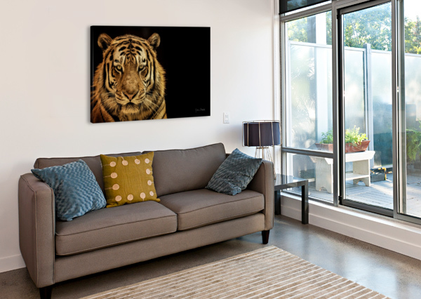 MASSIVE SIBERIAN AMUR TIGER  JULIAN STARKS PHOTOGRAPHY  Canvas Print