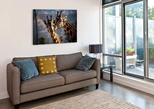 LOVING GIRAFFES JULIAN STARKS PHOTOGRAPHY  Canvas Print
