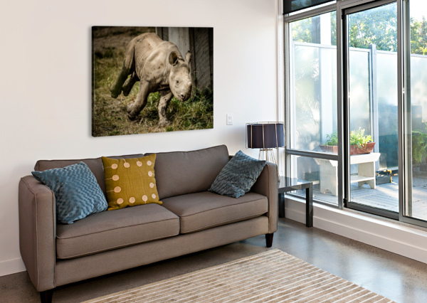 BABY RHINO JULIAN STARKS PHOTOGRAPHY  Canvas Print