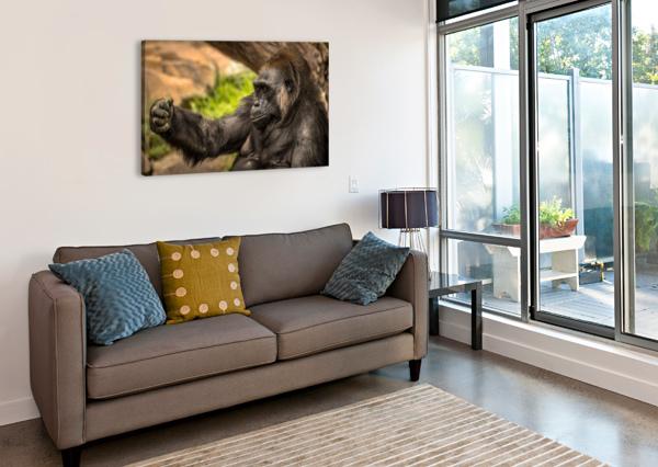 QUIET GORILLA SLEEPING JULIAN STARKS PHOTOGRAPHY  Canvas Print