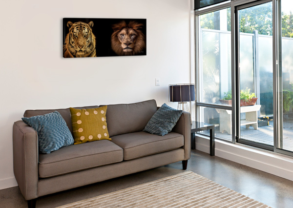 THE KINGS OF BEASTS - NO TITLE JULIAN STARKS PHOTOGRAPHY  Canvas Print