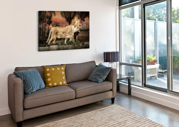 THE LOVING LION COUPLE JULIAN STARKS PHOTOGRAPHY  Canvas Print