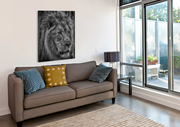 ARTISTIC BLACK AND WHITE LION CONNIE MAHER  Canvas Print
