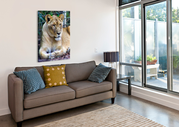 LIONESS CONNIE MAHER  Canvas Print
