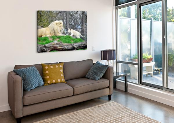WHITE LION WITH BABY KIKKIA JACKSON  Canvas Print