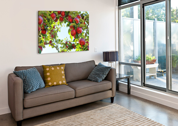 APPLES ORCHARD- HARVEST ALEXANDRA DRAGHICI  Canvas Print