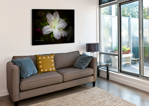 WHITE AZALEA  CONNIE MAHER  Canvas Print