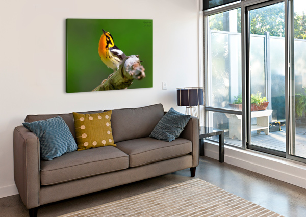 BIRDS JIM ZENOCK  Canvas Print