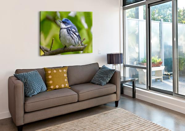 BIRDS JIM ZENOCK  Canvas Print