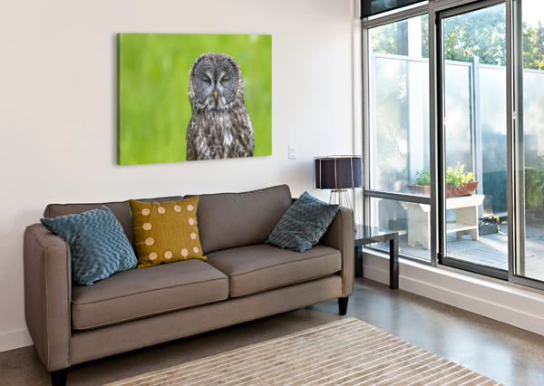 GREAT GREY OWL - GREY ON GREEN KEN ANDERSON PHOTOGRAPHY  Canvas Print