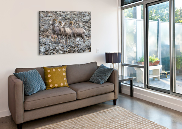 BIG HORN SHEEP - FAMILY PORTRAIT KEN ANDERSON PHOTOGRAPHY  Canvas Print