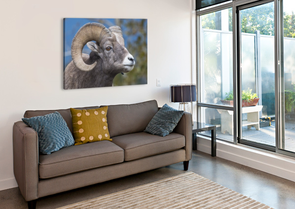 BIG HORN SHEEP - PORTRAIT KEN ANDERSON PHOTOGRAPHY  Canvas Print