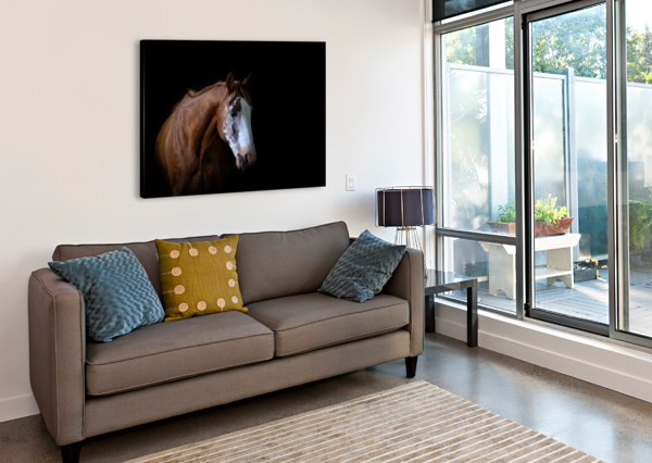 STUDIO HORSES VICTOR ROSE PHOTO  Canvas Print