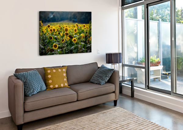 SUNFLOWER FIELD LUCAS MOORE  Canvas Print