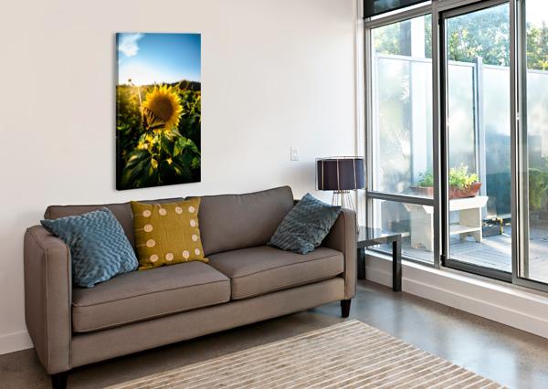 SUNFLOWER LOVE LUCAS MOORE  Canvas Print