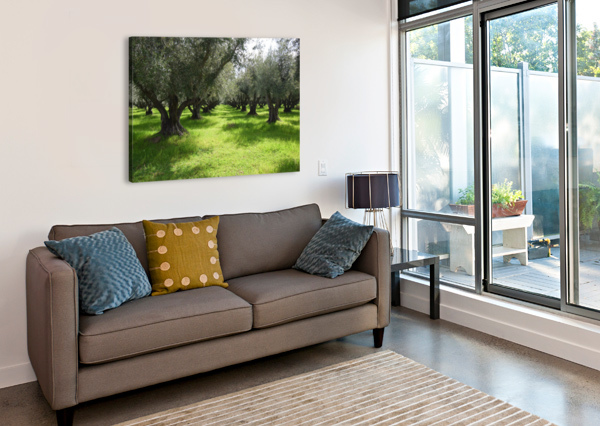 OLIVE ORCHARD IN SPRING FRANK WILSON  Canvas Print