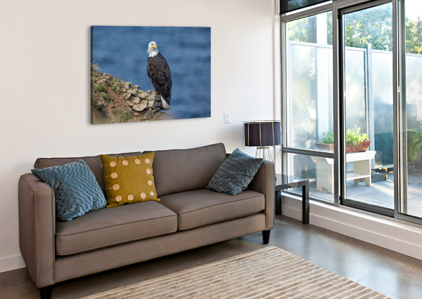 PERCHED AND PROUD MICHEL SOUCY  Canvas Print
