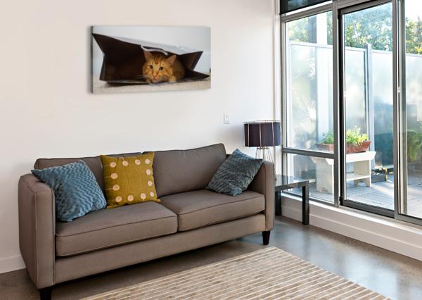 CAT IN THE BAG DAVID YOON  Canvas Print