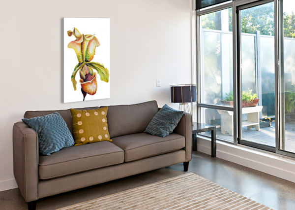 BLOOMING PAPHIOPEDILUM ORCHIDS NISURIS ART  Canvas Print