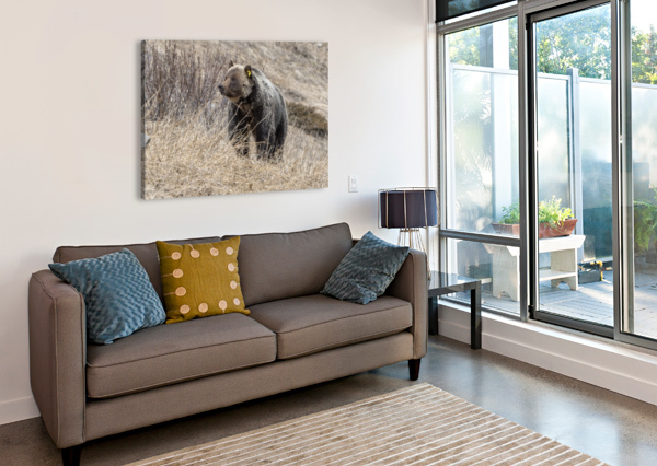 6897 - GRIZZLY BEAR 2160 KEN ANDERSON PHOTOGRAPHY  Canvas Print