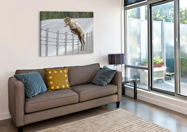 7585 - BIGHORN SHEEP - KANANASKIS COUNTRY ALBERTA. CANADA KEN ANDERSON PHOTOGRAPHY  Canvas Print