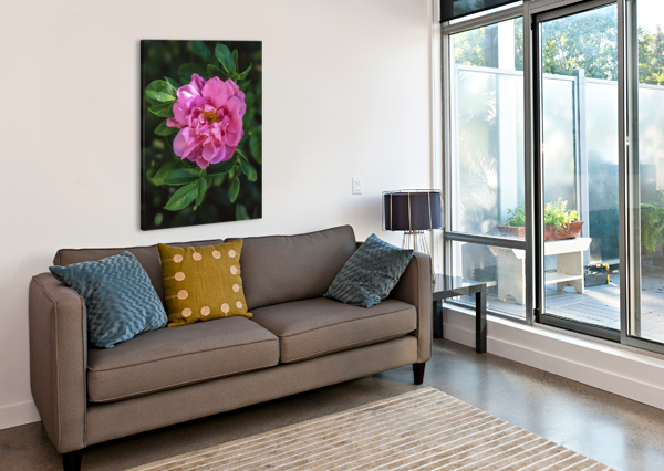 LAST ROSE OF FALL MUMBLEFOOT  Canvas Print