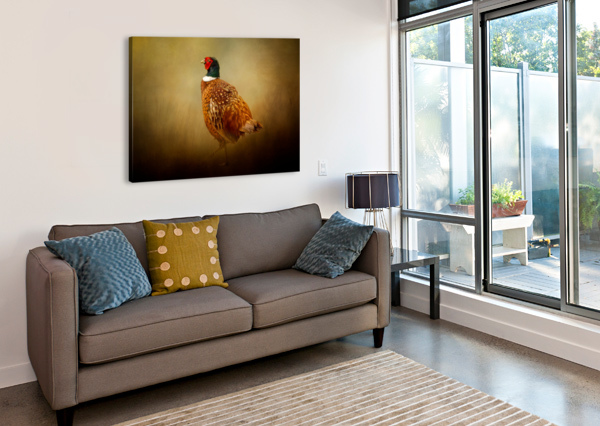 RING NECKED PHEASANT MICHEL SOUCY  Canvas Print
