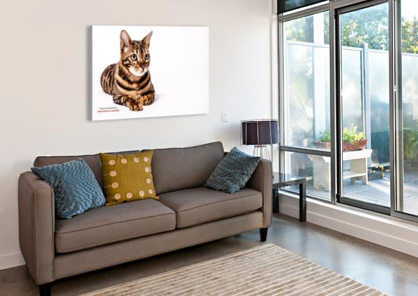 CAT LIFE JOHNNYPHOTOFREAK  Canvas Print