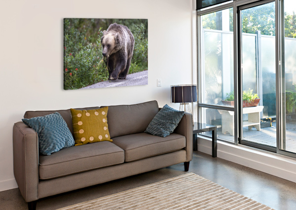 0037 - GRIZZLY BEAR WITH DANDELIONS IN BANFF NATIONAL PARK CANADA. KEN ANDERSON PHOTOGRAPHY  Canvas Print