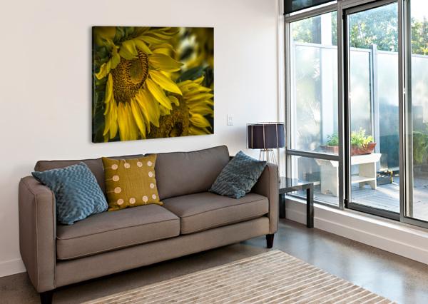 SUNFLOWER DAWN  LISA DREW MINNEAPOLIS PHOTO ARTIST  Canvas Print