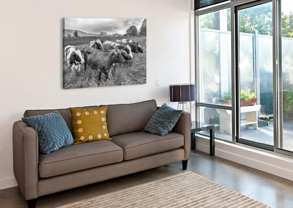 COW HERD UP CLOSE CARMEL STUDIOS  Canvas Print