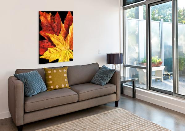 FALL MAPLE LEAVES 2 RICHARD KROL  Canvas Print