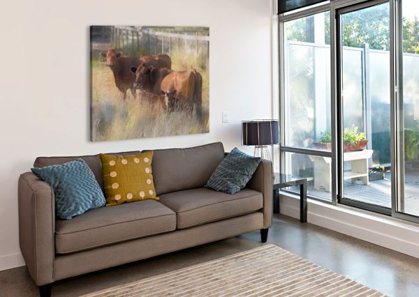 THREE COWS  CARMEL STUDIOS  Canvas Print