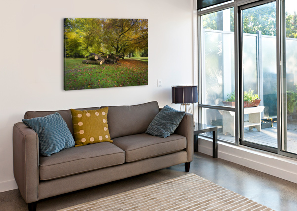 AUTUMN LEAVES AND CUT TREES LEIGHTON COLLINS  Canvas Print