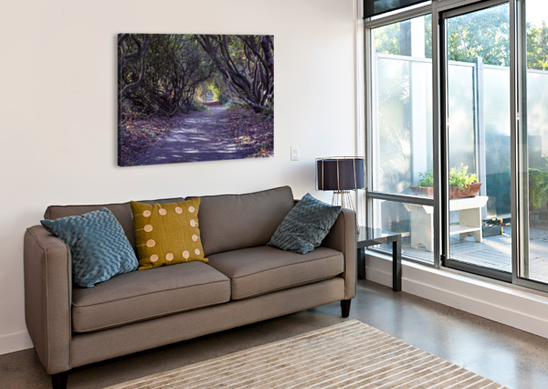 TREE LINED RHODODENDRON WALKWAY LEIGHTON COLLINS  Canvas Print