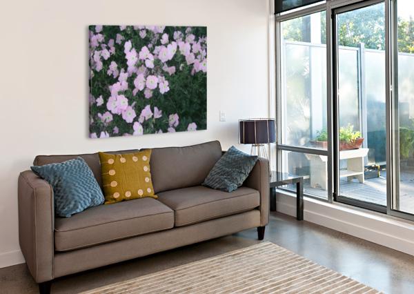 FLOWER GARDEN 2 ARIZONA PHOTOS BY JYM  Canvas Print