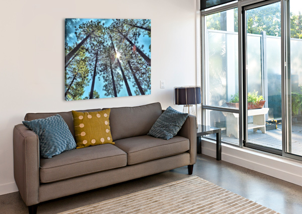 TREE TOPS ARIZONA PHOTOS BY JYM  Impression sur toile