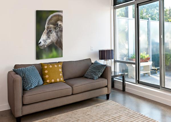 5512 - BIG HORN SHEEP KEN ANDERSON PHOTOGRAPHY  Canvas Print
