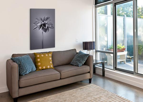 DAHLIA FLOWER ASSAF FRANK  Canvas Print