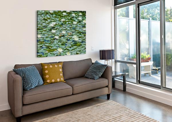 WATER LILIES ASSAF FRANK  Canvas Print