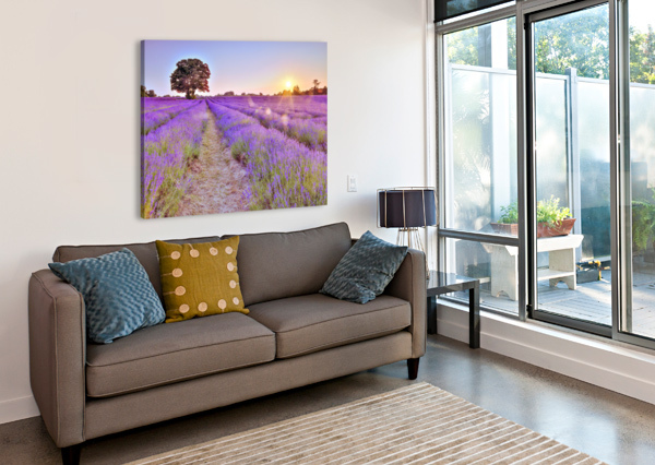 LAVENDER FIELD AT SUNSET ASSAF FRANK  Canvas Print