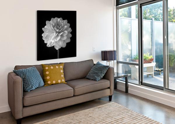 DAHLIA FLOWER ON BLACK BACKGROUND ASSAF FRANK  Canvas Print