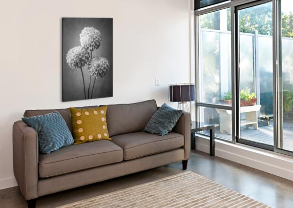 THREE DAHLIA FLOWERS ASSAF FRANK  Canvas Print