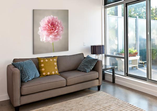 DAHLIA FLOWER ON COLORED BACKGROUND ASSAF FRANK  Canvas Print
