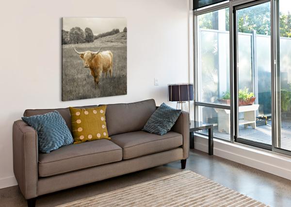 HIGHLAND COWS ASSAF FRANK  Canvas Print