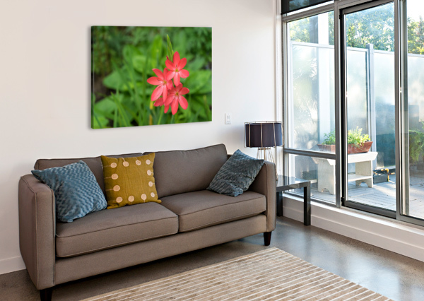 THREE BOLD PINK RIVER LILY BLOOMS - EXOTIC SOUTH AFRICAN BEAUTIES IN A GARDEN GEORGIAM  Canvas Print