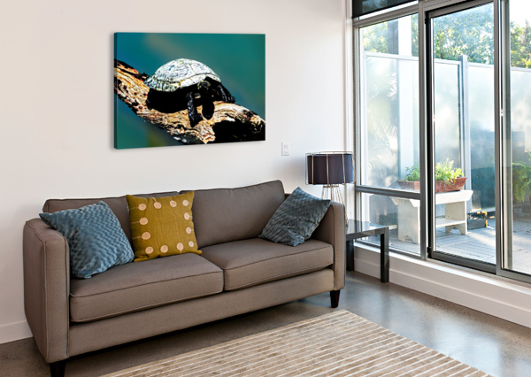 SNAPPING TURTLE 360 STUDIOS  Canvas Print