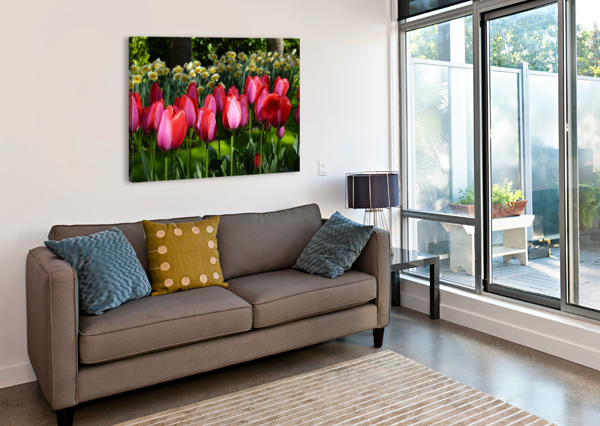 TULIPS OF THE NETHERLANDS 4 OF 7 1NORTH  Canvas Print